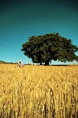 Harvest - by Tranuf
