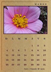 March Calendar Wood