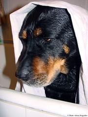 """Как он мне надоел:("" (Alexey Rogozhin) Tags: dog russia lotta sonydsch5"