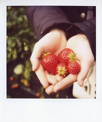 strawberry* (tae*) Tags: family japan polaroid sx70 strawberry saitama 600film     naomichan