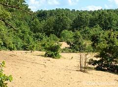 Oak Openings Sand Dunes