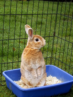 BunnyStand