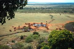 Kenya Safari III (China Chas) Tags: africa animals kenya scan safari 1994 plain tsavo wateringhole tsavoeast voi pentaxp30 tsavoeastnationalpark kwangtung voisafarilodge