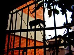 Da 25 - Prison Break (Pankcho) Tags: ass danger contraluz toy caballo cuerda march bars day break shadows escape extreme ace angles donkey rope prison burro peligro 25 jail hero adventures tight da marzo sombras juguete caballito fearless hroe aventuras audaz extremo prisin barrotes crcel floja buwrro 100venezuela