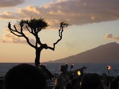 Luau View (Wild Turkey) Tags: hawaii maui ykk