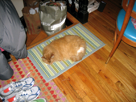 Cat Relaxin