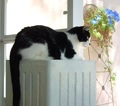 binky.enjoying.view (axiom_driver_1969) Tags: cats cute beautiful cat paw sweet adorable kitty cutie cutecat beautifulcat