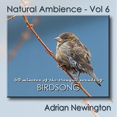 Twiggy...One of My Photos on New CD (ozoni11) Tags: music bird nature birds animal animals album cd coverart australia ambient cdcover ambience featheryfriday animaladdiction