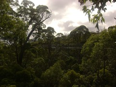 The Tree Top Walk