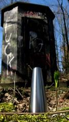 SteelMushroom (stefan_jalowy) Tags: railroad plants plant green nature spring natur blossoms pflanzen eisenbahn growth bunker environment grn biology springtime frhling biologie knospen frhjahr bahndamm wachstum bahnlinie