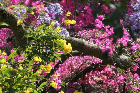 Colours of Spring...Hotel Shevaroy's, Yercaud