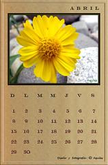 April Calendar Wood
