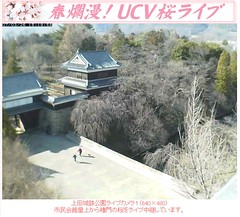 櫻花含苞!20070326上田城跡公園