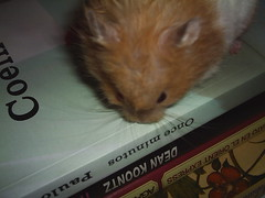 Once minutos (m471c4) Tags: lol hamster sasha paulocohelo
