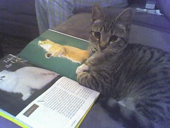 "Furio reading ""Cat Fancy"" (3 of 3)"