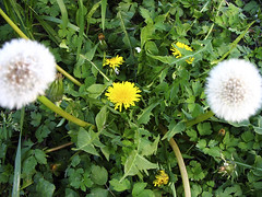 IMG_0558 (Robert Romac) Tags: nature canon powershot a610