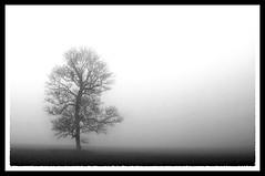 Solitude (M4gic) Tags: bw mist tree landscape topv555 solitude hampshire frame flickrsoupforthesoul naturesfinest fsftsblog abigfave impressedbeauty superaplus aplusphoto superbmasterpiece beyondexcellence botopv0507 thegoldenmermaid
