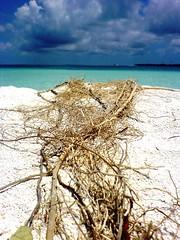 my relationship with the ocean... (dhoruhandi) Tags: maldives manal dhmaagaa dhoruhandi sonyericssonmobilephonephotography