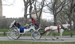 Horse drawn carriage - Central Park - NYC - New York (blmiers2) Tags: nyc newyorkcity travel horse white newyork canon geotagged blog other carriage centralpark wheels powershot horsedrawn g6 whitehorse 2007 horseandcarriage carriages horsedrawncarriage horseandbuggy horsecarriage horseandcart carriageride horsebuggy horsedrawncarriages carriagerides horseandbuggyrides horsecarriageride horsecarriages horsedrawnbuggy horsedrawnvehicle horsedrawnvehicles horsedrawnbuggies horseandcarriageride horsedrawncarriageride horseandbuggyride horseandcarriages horsedrawncarriagerides horsecarriagerides drawncarriage horseandcarriagerides carriageshorsedrawn drawncarriages fourwheeledhorsedrawncarriage horsecarriageforsale horsedrawncarriagepictures blm18 blmiers2