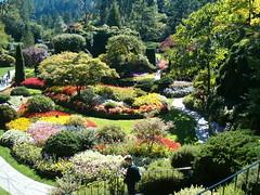 Butchart Gardens - by tbemus