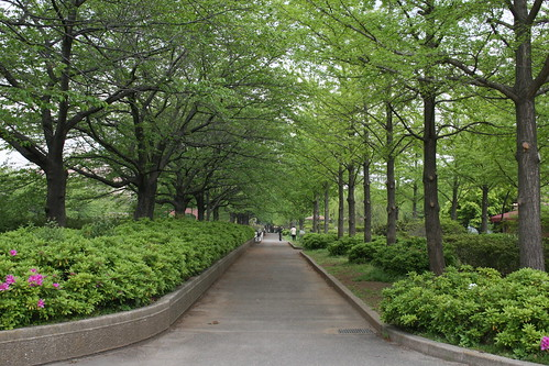namikimichi - road lined with trees