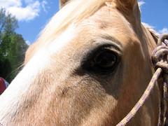 Cowboy's closeup
