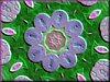 violetstones23.12345