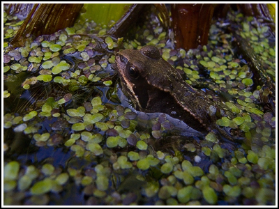 2007-05-05  Ickle Frogs Allotment S70  006 copy