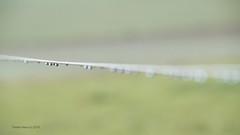 Raindrops at a pasture fence (Yberle.Foto) Tags: regentropfen weidezaun regen grn zaun unscharf