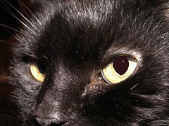 Ethan (Mamluke) Tags: home cat kat chat ethan gato katze gatto mamluke