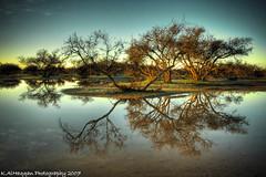 Rain Water in Somman Desert (Khalid AlHaqqan) Tags: trees lake reflection tree water rain clouds sunrise desert khalid ksa alhaqqan somman