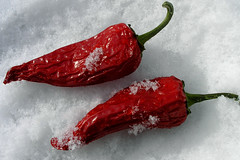 Chilly peppers!