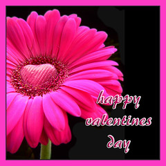 valentines day (Vanessa Pike-Russell) Tags: pink love easter bestof day chocolate photoshopped romance gerbera mostinteresting valentines portfolio popular 2007 fujifinepix myfaves s5600