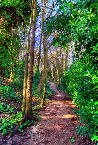 021407 A walk through the woods...