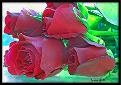 HAPPY ANNIVERSARY (welshlady) Tags: red roses ilovenature happy 100views bloom lovely florafauna eyeofthebeholder standingovation greenandred helluva blueribbonwinner theworldthroughmyeyes mywinner abigfave themagicofcolour 31stanniversary gerty99