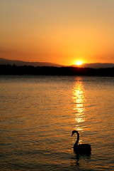 canberra sunset (M3R) Tags: sunset nature water golden geese australia canberra thesource lakeburleygriffin canonef28105mmf3545usm canberrasunset canon400d photofaceoffwinner mariaismawi gapsept2011