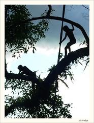 Little Tarzan (Araleya) Tags: travel boy girl kids children lumix fz20 jump play lagoon panasonic climbing laos tarzan vangvieng damncool araleya aplusphoto thampukham ถ้ำปูคำ