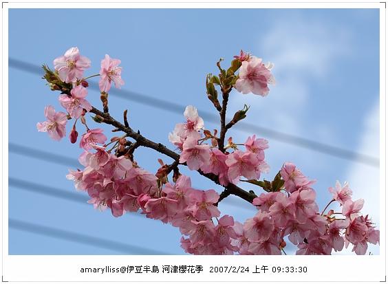 IMG_0062