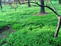 Green grass, so green