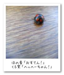 ladybug / てんとうむし