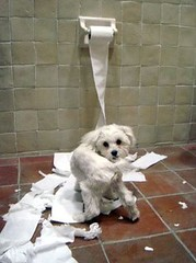 Dog Playing with Toilet Paper