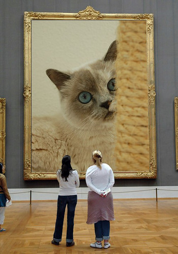 admiring a cat