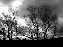 Hilltop trolleyrace (BlindPew) Tags: trees bw silhouette forest trolley hill cluds