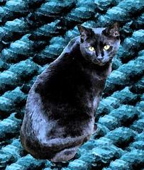 yarncat3