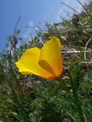 20070301 Poppy