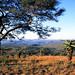 Südafrika Hluhluwe Umfolozi Nationalpark: Blick über einen Aloenhang
