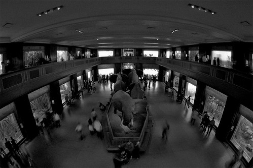 AMNH Mammal Hall