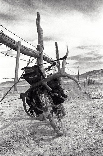 Antlers on a Bicycle