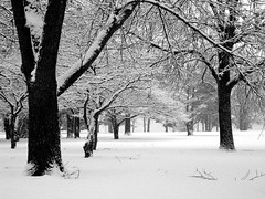 The Snowy Evening