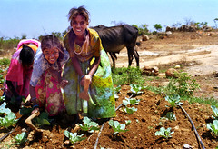 INDIA (BoazImages) Tags: life girls red india green beautiful smile work weed women colorful asia pretty ap cabbage agriculture andhra sari development weeding southindia pradesh kuppam documentry mulukualpali